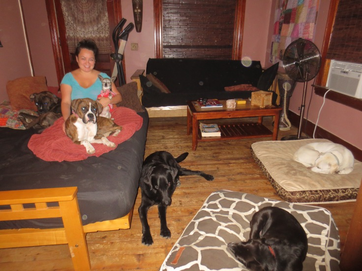 Rachel's Tranquil in home dog care