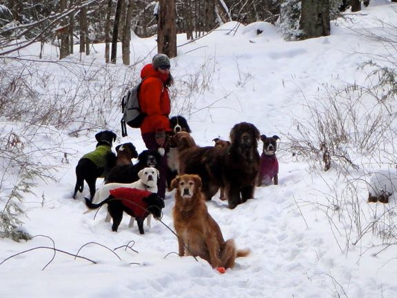 Rachel's Tranquil in home dog care meets up with Vermont Dog Pack!