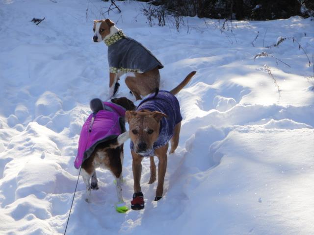 All bundled up for the cold day! Ize looks like she is sitting on top of Adia and Rosebud:)
