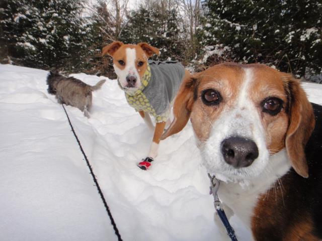 Winter wonderland with Rosebud, Ize & Brodie